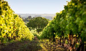 Prantsuse Instituut õpituba veinid