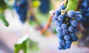 Atelier dégustation et découverte du vin