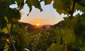 Prantsuse Instituudi õpituba: sissejuhatus veinimaailma